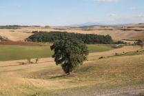 strada guistrigona, panoramica fra chianti e crete senesi (1)