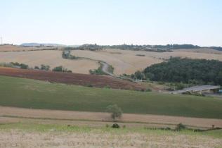 strada guistrigona, panoramica fra chianti e crete senesi (5)