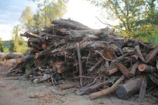 taglio bosco e cippato torrente malena (11)