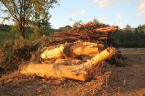 taglio bosco e cippato torrente malena (13)