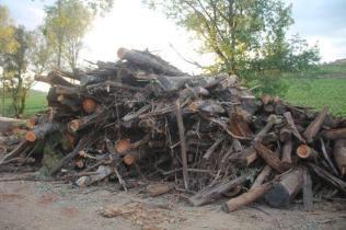 taglio bosco e cippato torrente malena (16)