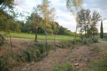 taglio bosco e cippato torrente malena (19)