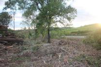 taglio bosco e cippato torrente malena (2)