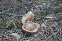 taglio bosco e cippato torrente malena (4)