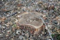 taglio bosco e cippato torrente malena (5)