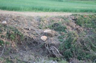 taglio bosco e cippato torrente malena (6)