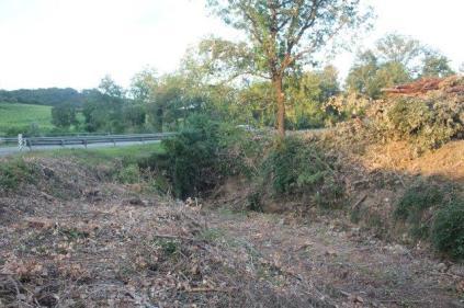 taglio bosco e cippato torrente malena (7)