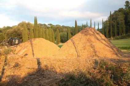 taglio bosco e cippato torrente malena (8)