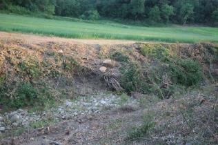 taglio bosco e cippato torrente malena (9)