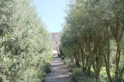 castello di orgiale (11)