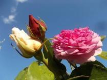 fiori-maggio-vertine-2020-1