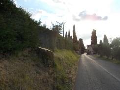 guistrigona querce tagliate sulla strada (6)