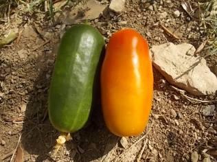 meloncella e san marzano