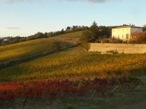 castello di brolio, tramonto, vigne (1)