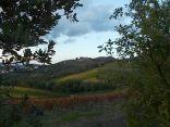 castello di brolio, tramonto, vigne (13)