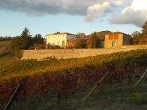 castello di brolio, tramonto, vigne (2)