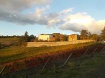 castello di brolio, tramonto, vigne (3)