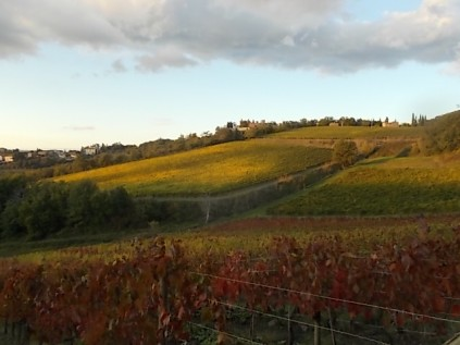 castello di brolio, tramonto, vigne (4)