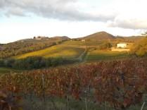 castello di brolio, tramonto, vigne (7)