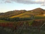 castello di brolio, tramonto, vigne (9)