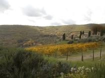castello di meleto autunno 2020 (14)