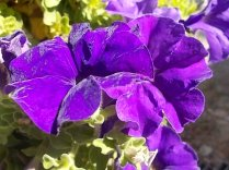chianti, fiori, vertine d'autunno 2020 (10)