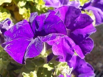 chianti, fiori, vertine d'autunno 2020 (11)