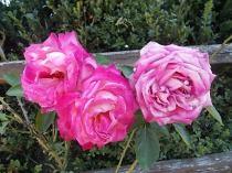 chianti, fiori, vertine d'autunno 2020 (12)