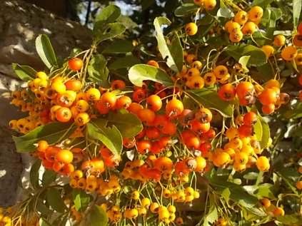 chianti, fiori, vertine d'autunno 2020 (17)