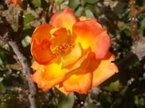 chianti, fiori, vertine d'autunno 2020 (21)