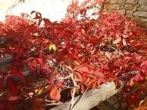 chianti, fiori, vertine d'autunno 2020 (27)