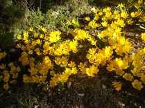chianti, fiori, vertine d'autunno 2020 (28)