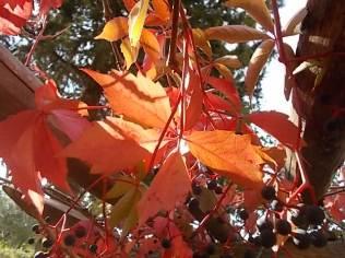 chianti, fiori, vertine d'autunno 2020 (30)