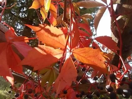 chianti, fiori, vertine d'autunno 2020 (31)