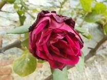 chianti, fiori, vertine d'autunno 2020 (32)