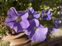 chianti, fiori, vertine d'autunno 2020 (33)