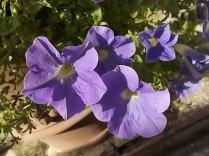 chianti, fiori, vertine d'autunno 2020 (34)
