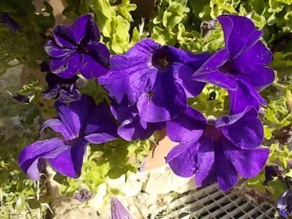 chianti, fiori, vertine d'autunno 2020 (35)