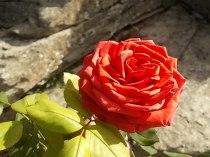 chianti, fiori, vertine d'autunno 2020 (37)