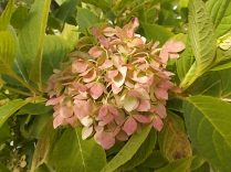 chianti, fiori, vertine d'autunno 2020 (38)