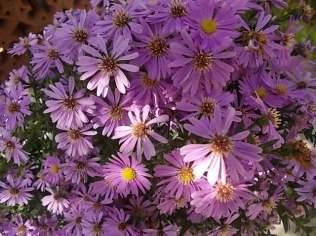 chianti, fiori, vertine d'autunno 2020 (40)