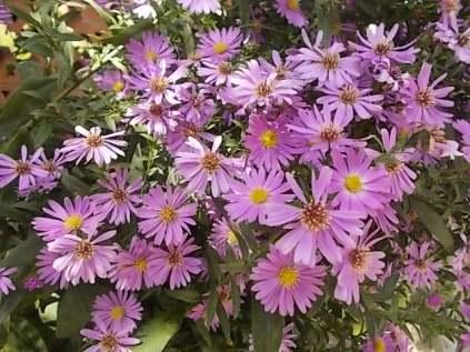 chianti, fiori, vertine d'autunno 2020 (41)
