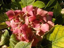 chianti, fiori, vertine d'autunno 2020 (44)