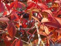 chianti, fiori, vertine d'autunno 2020 (46)