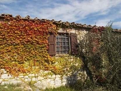 chianti, fiori, vertine d'autunno 2020 (48)