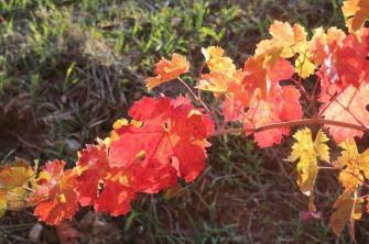 chianti, fiori, vertine d'autunno 2020 (5)