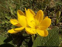chianti, fiori, vertine d'autunno 2020 (8)