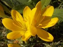 chianti, fiori, vertine d'autunno 2020 (9)