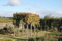 orto felice, foglie rosse autunno 2020 (13)
