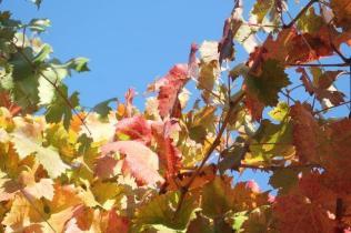 orto felice, foglie rosse autunno 2020 (6)